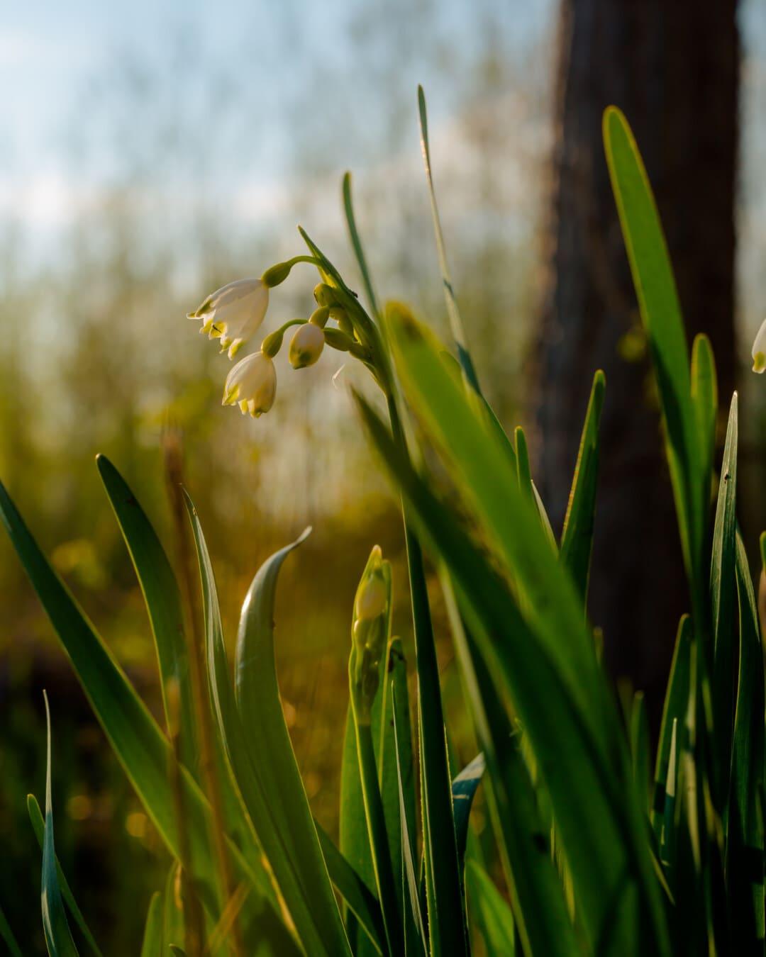white flower, spring time, winter, grass, green leaves, spring, field, flower, leaf, plant