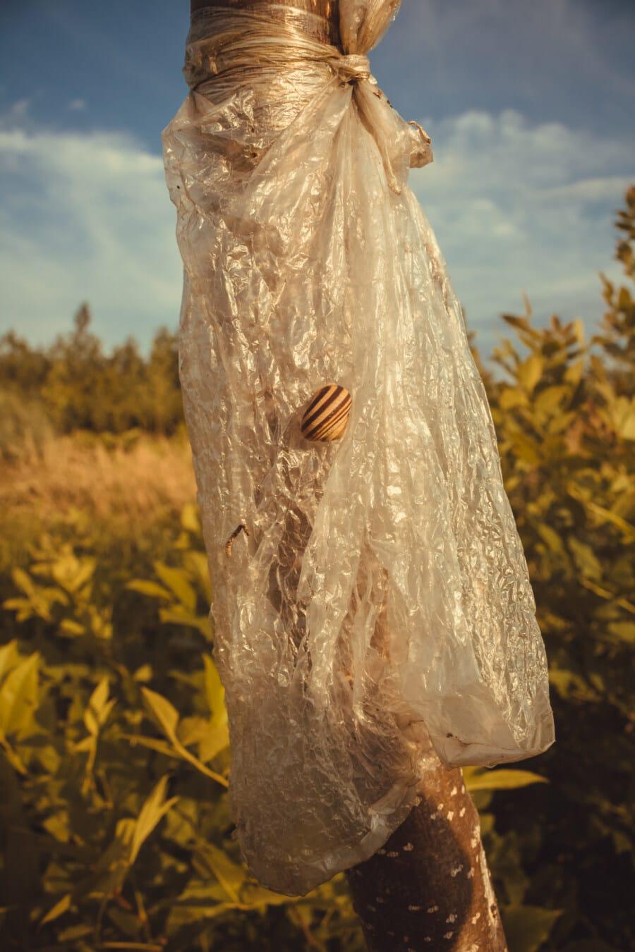 liten, sneglen, lys brun, plast, nylon, plastpose, søppel, treet, natur, solnedgang