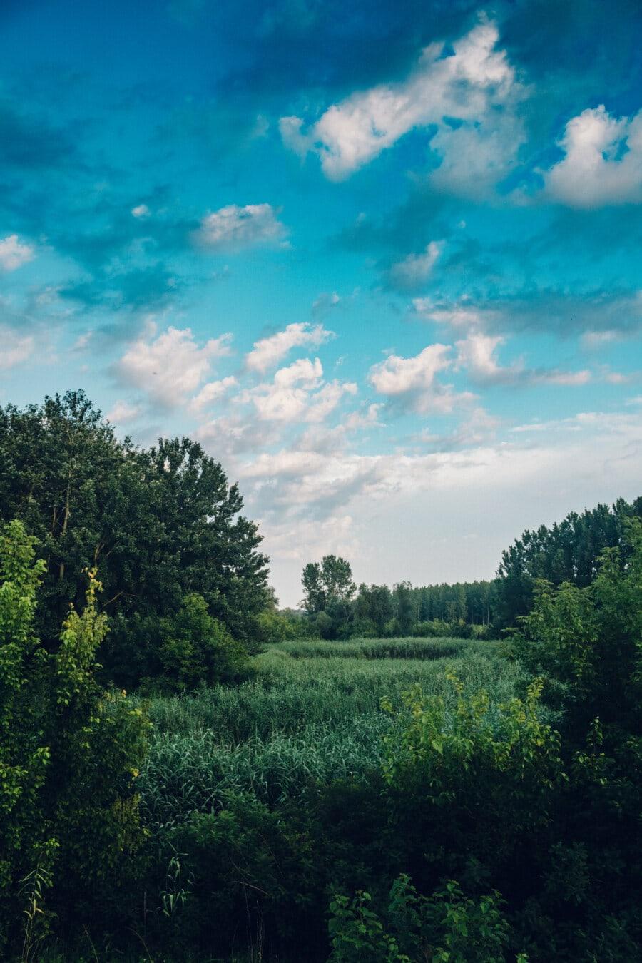 Sumpf, Marschland, Frühling, Grün, blauer Himmel, im freien, Natur, Struktur, Wald, Landschaft