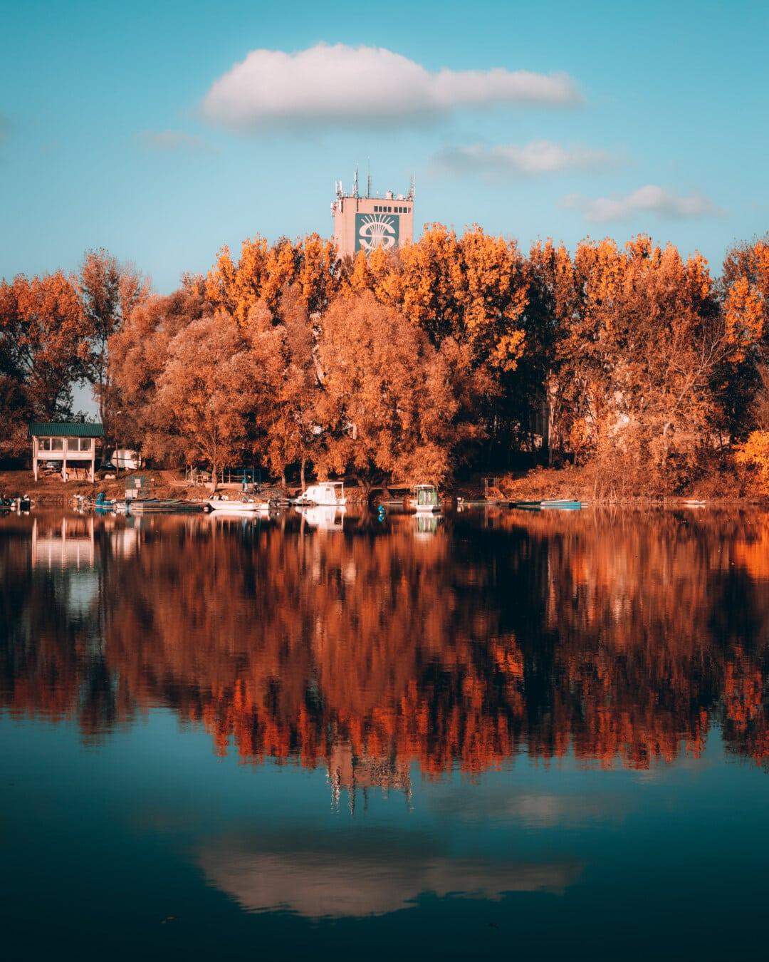 høstsesongen, innsjøen, sted, majestetiske, vann, refleksjon, kysten, treet, landskapet, innsjø