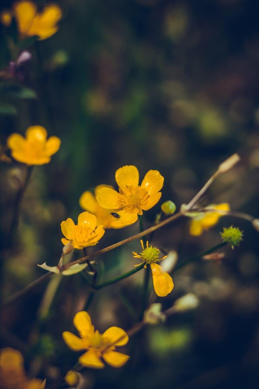 Wildblumen, gelblich-braun, Graspflanzen, Detail, Feld, gelb, Natur, Blatt, Anlage, Kraut