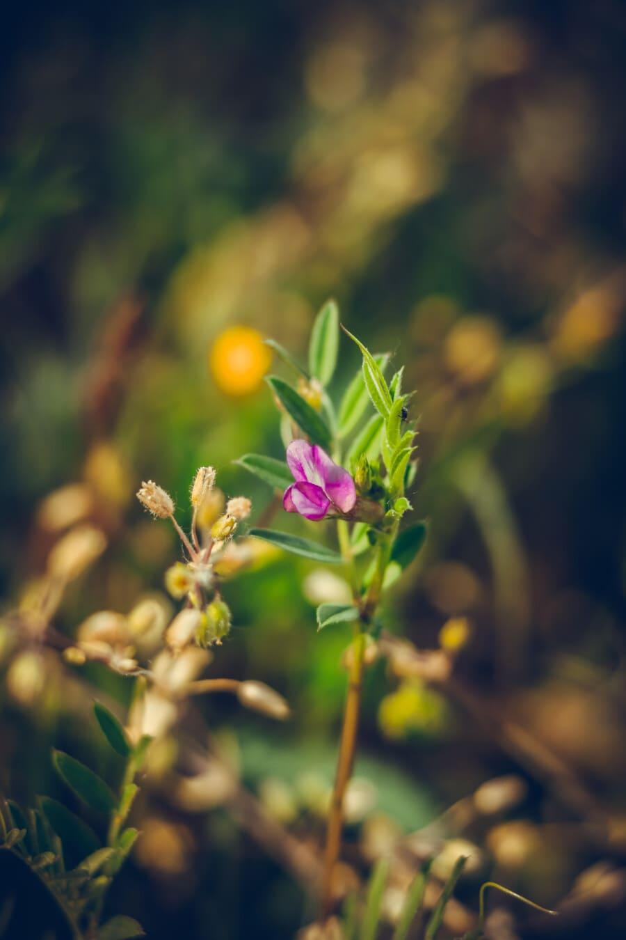 fleurs sauvages, violacé, rosâtre, pétales, feuille, fleur, printemps, plante, nature, à l'extérieur