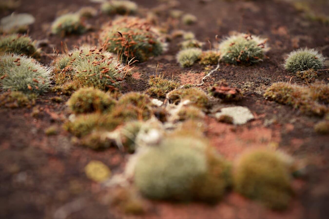 lichen, mossy, moss, autumn season, close-up, flowering, carnivorous plant, nature, leaf, flora