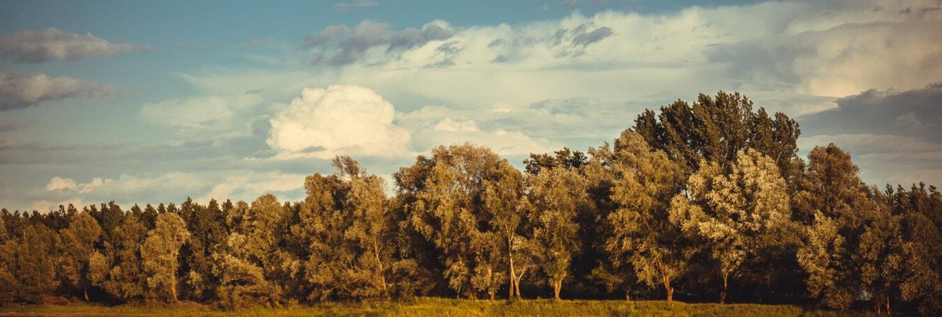 Panorama, Herbstsaison, Wald, blauer Himmel, Landschaft, Struktur, Natur, Holz, Landschaft, des ländlichen Raums