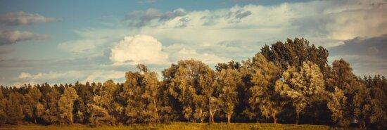 panorama, høstsesongen, skog, blå himmel, landskapet, treet, natur, tre, landskapet, landlig