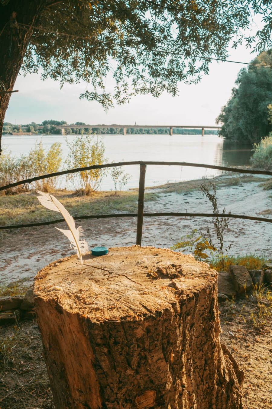 river, beach grass, trees, wood, detail, feather, tree, water, nature, outdoors