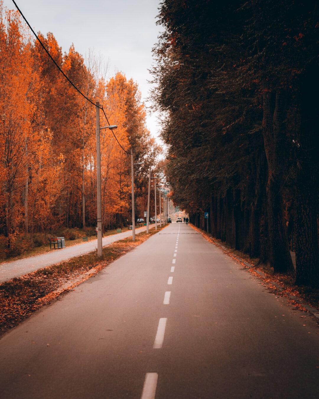 asphalte, Itinéraire, trottoir, ruelle, saison de l'automne, arbre, rue, paysage, Avenue, bois