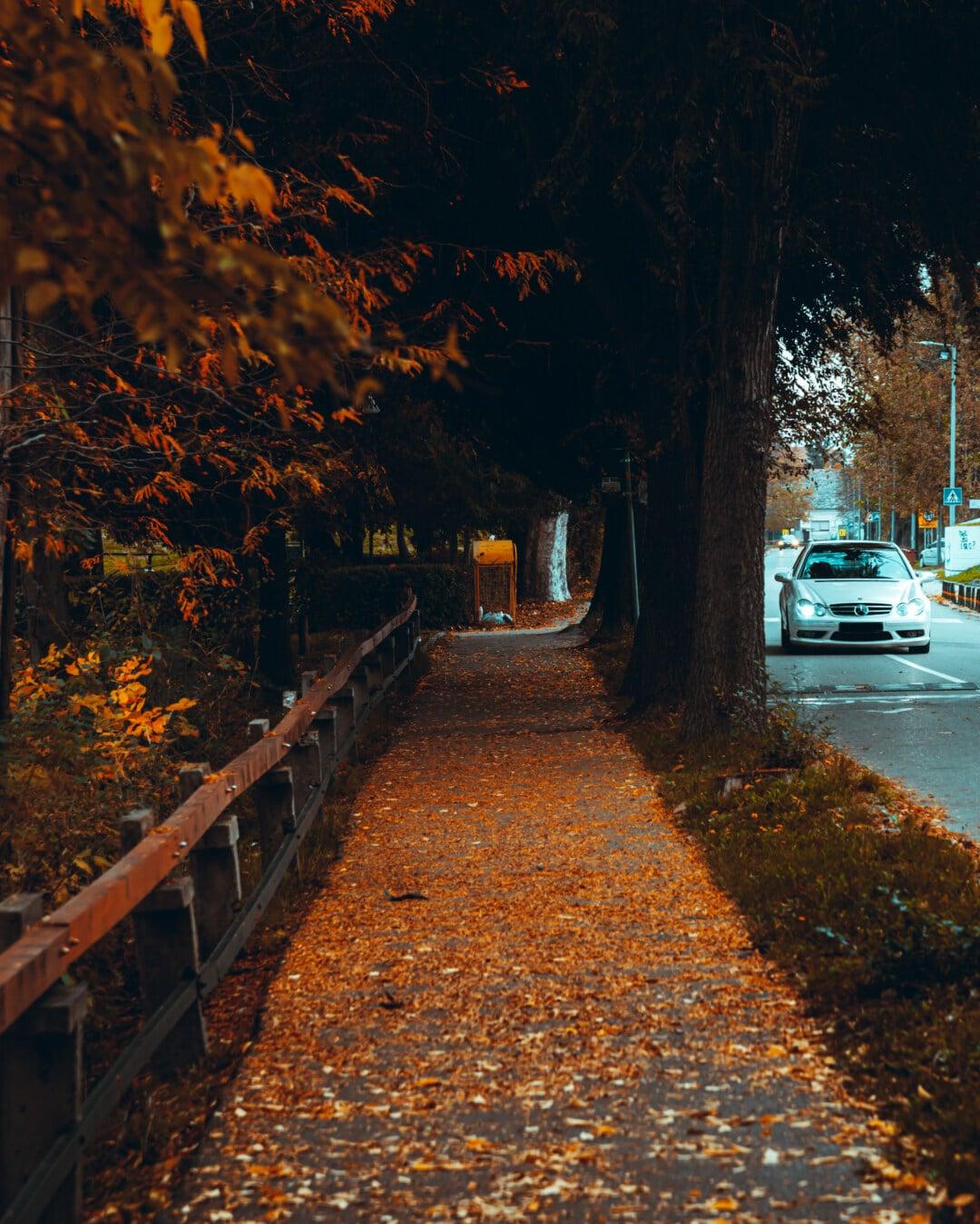 路地, 秋のシーズン, 通り, アスファルト, 道路, 車, 市街地, 木, ツリー, 道路