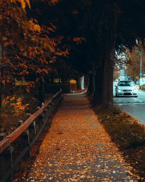 vicolo, stagione autunnale, Via, asfalto, strade, auto, area urbana, alberi, albero, strada