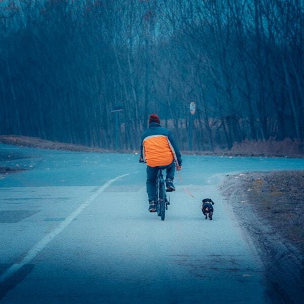 자전거, 남자, 교차로, 개, 레크리에이션, 애완 동물, 산책, 감기, 겨울, 사람들