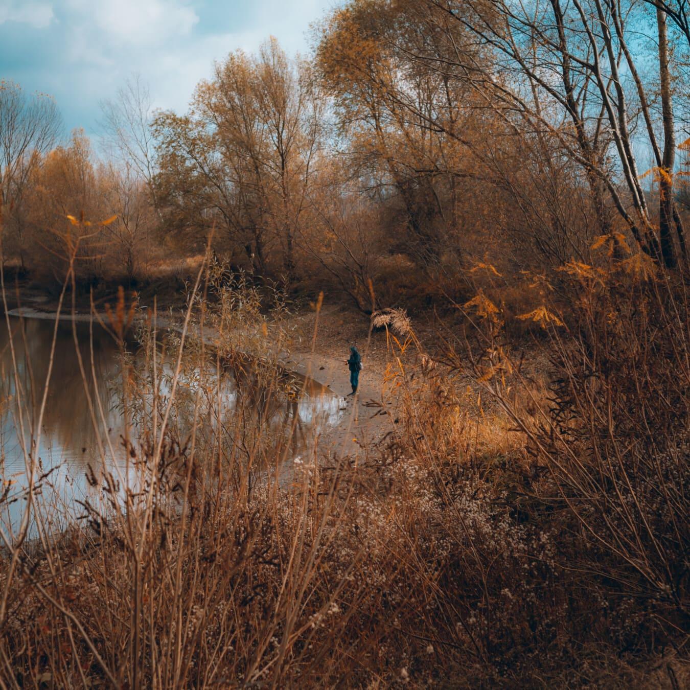 au bord du lac, plage, pêcheur, automne, octobre, Hiver, Hay, arbre, neige, paysage
