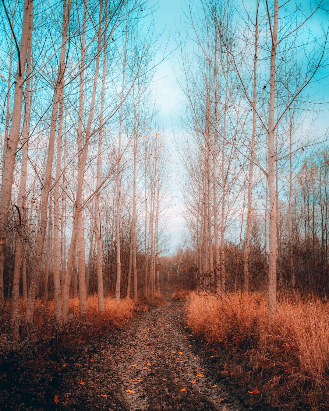 forêt, saison de l'automne, chemin forestier, automne, sentier, paysage, Hiver, bois, arbre, arbres