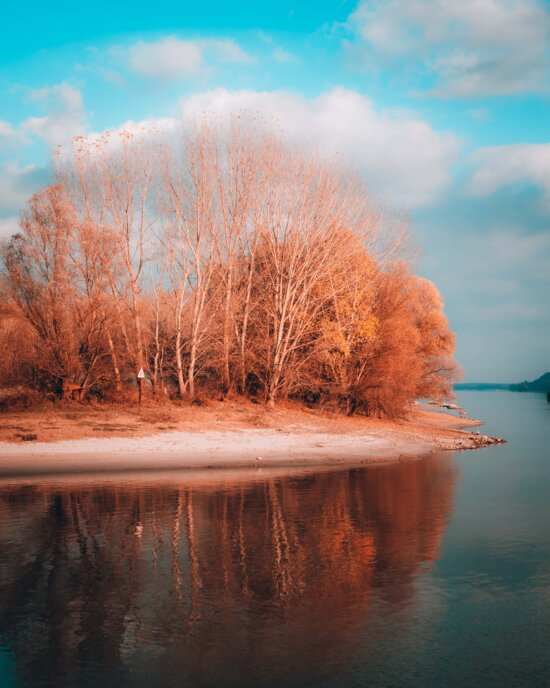 landscape, water, tree, dawn, sunset, nature, wood, river, bright, winter