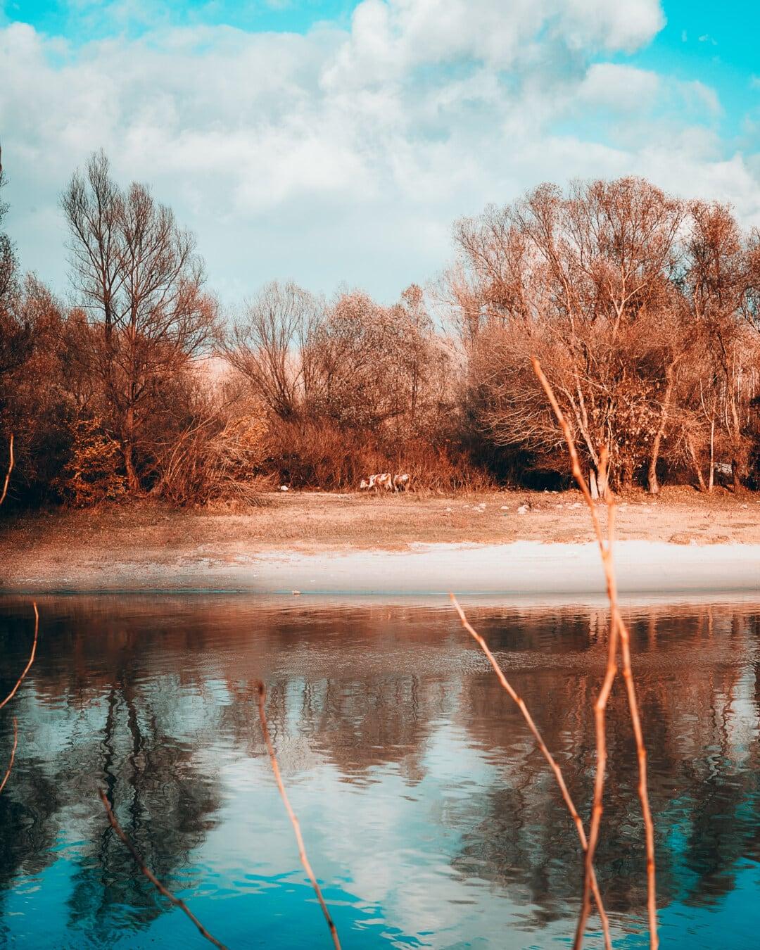 Dämmerung, Landschaft, Wald, Reflexion, Fluss, Wasser, Struktur, Natur, Holz, Sonnenuntergang