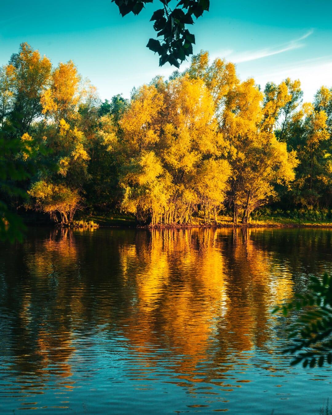 au bord du lac, saison de l'automne, octobre, réflexion, eau, lueur dorée, paysage, parc, forêt, automne