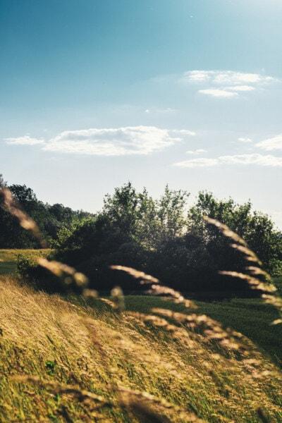 campo, campo de trigo, agrícolas, encosta, colinas, Aspen, paisagem, árvore, natureza, grama