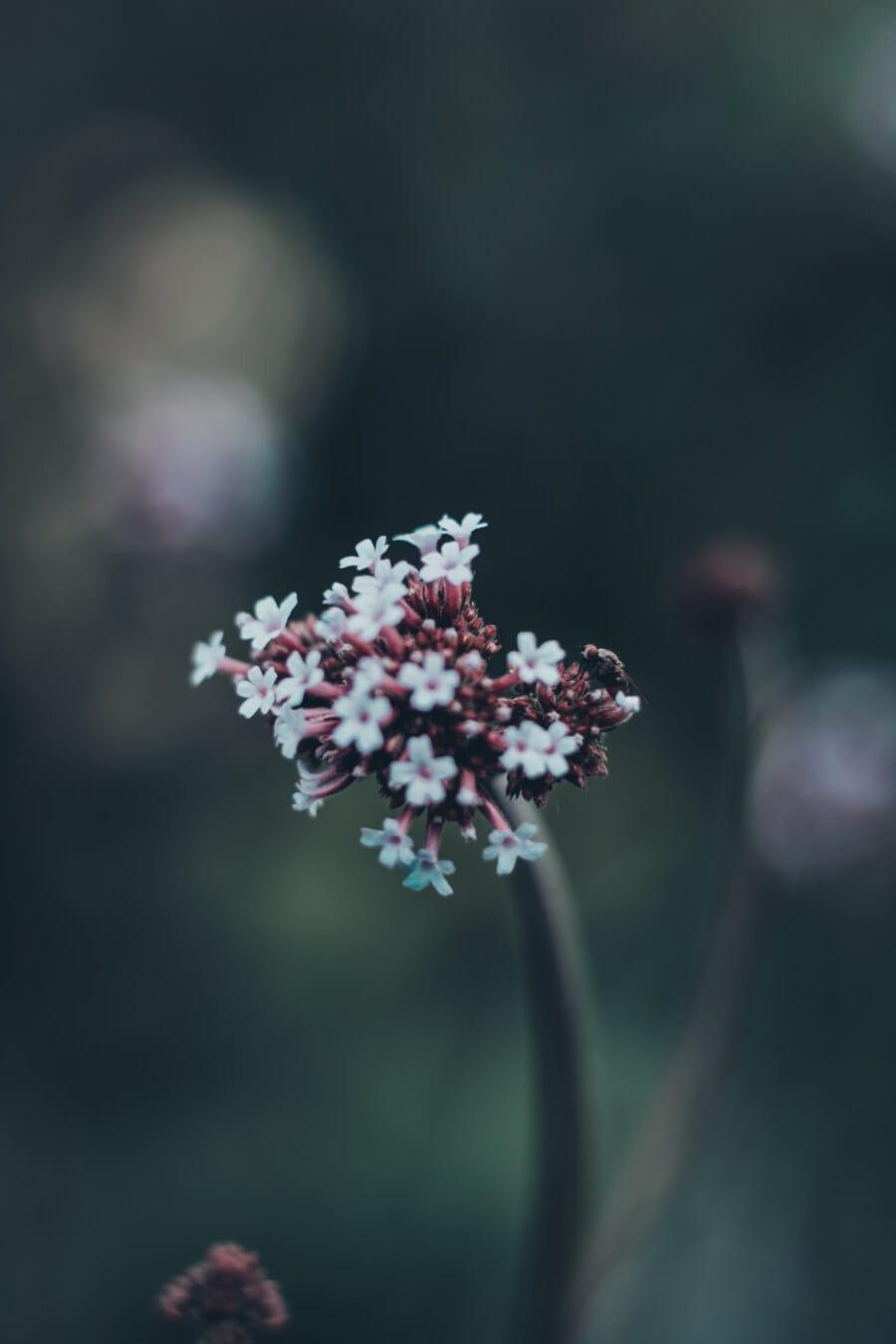 weiße Blume, Schafgarbe, Wildblumen, aus nächster Nähe, Insekt, Wildnis, Tierwelt, verwischen, Blume, Blüte
