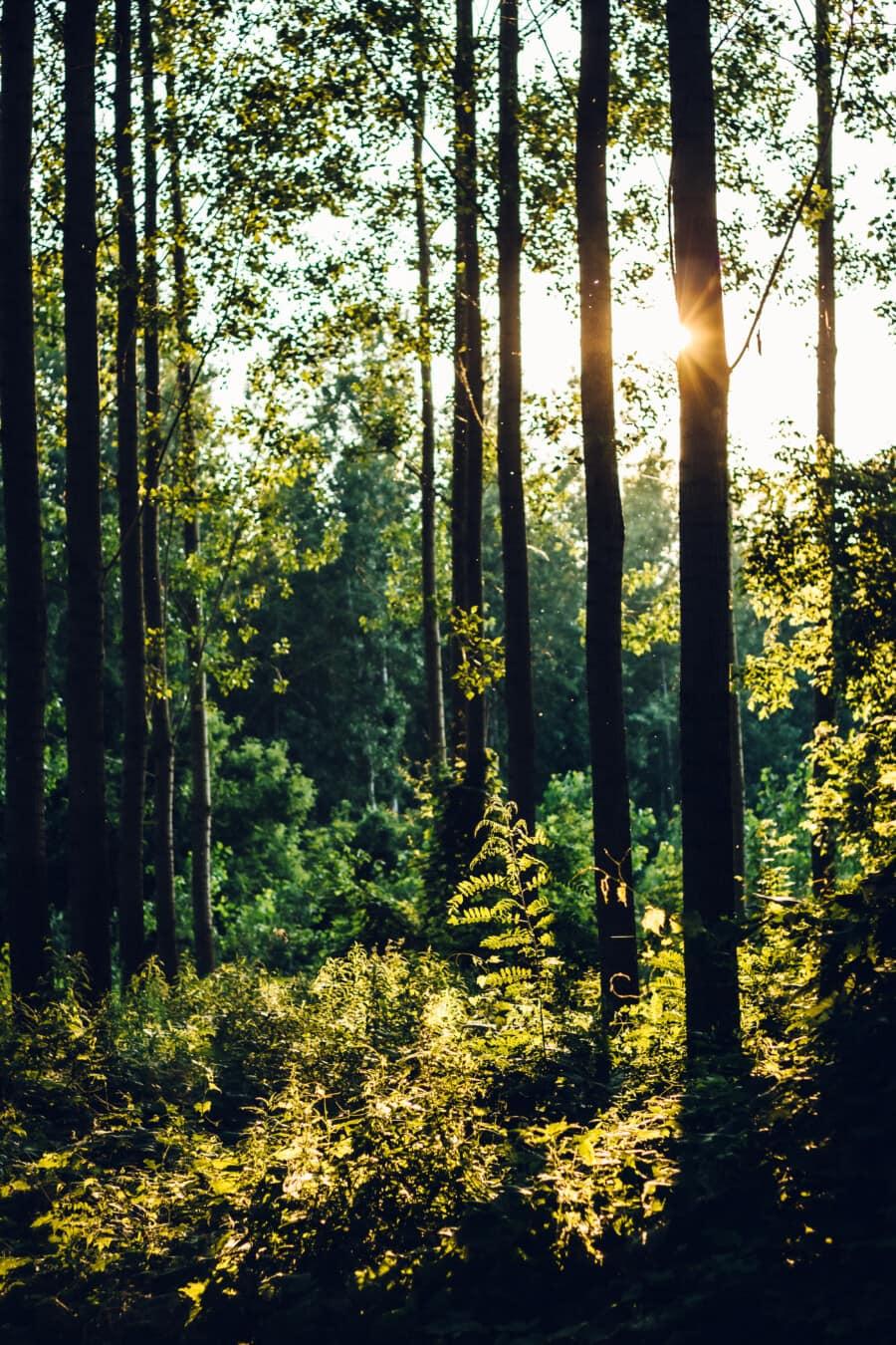 darkness, sun, silhouette, sunlight, forest, sunrays, wood, autumn, trees, landscape