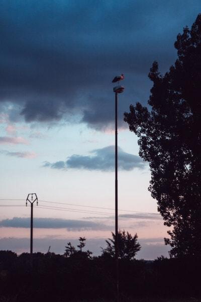 uccello, piedi, Polo, crepuscolo, cielo blu, sagoma, tramonto, luce, orizzontale, albero