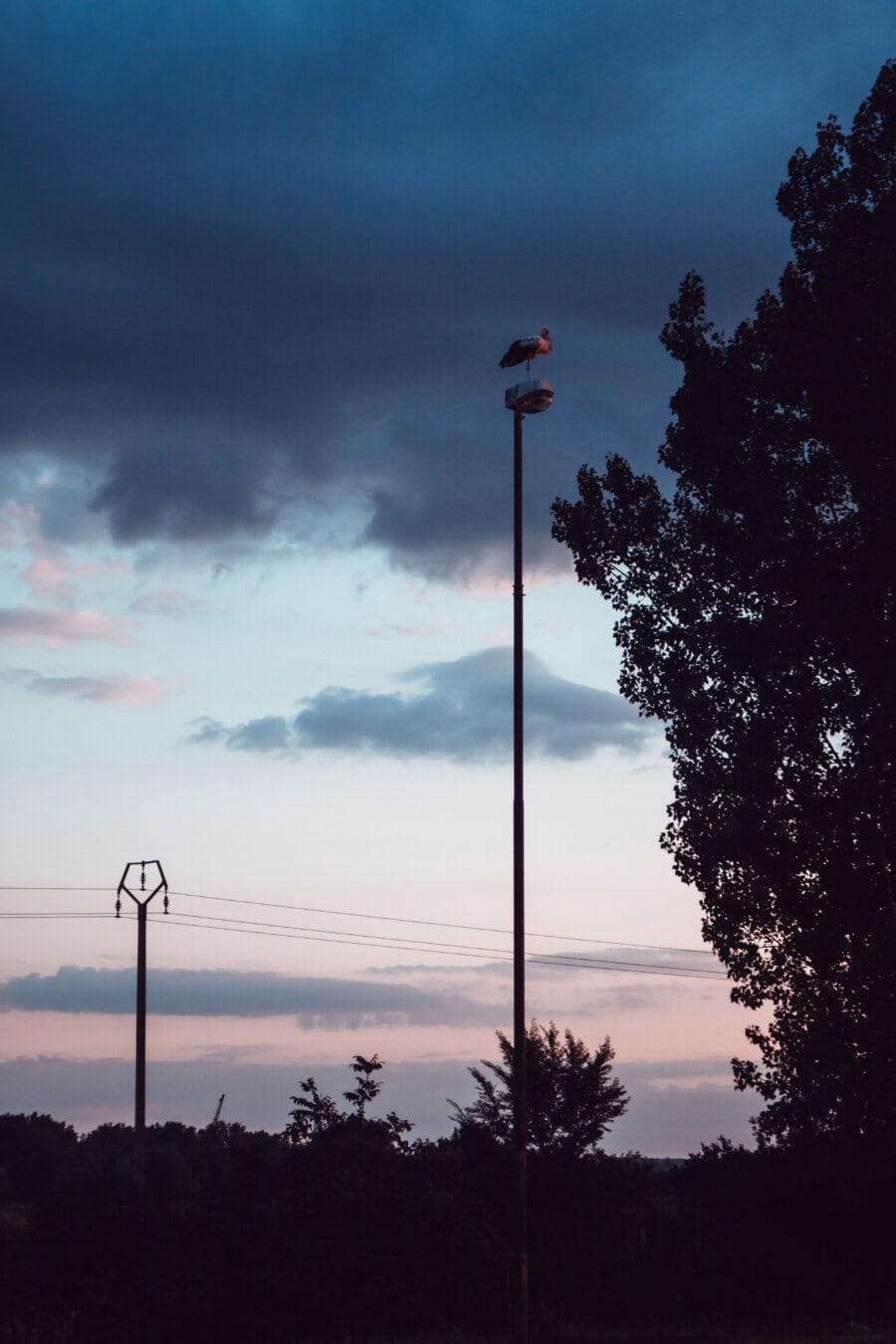 bird, standing, pole, dusk, blue sky, silhouette, sunset, light, landscape, tree