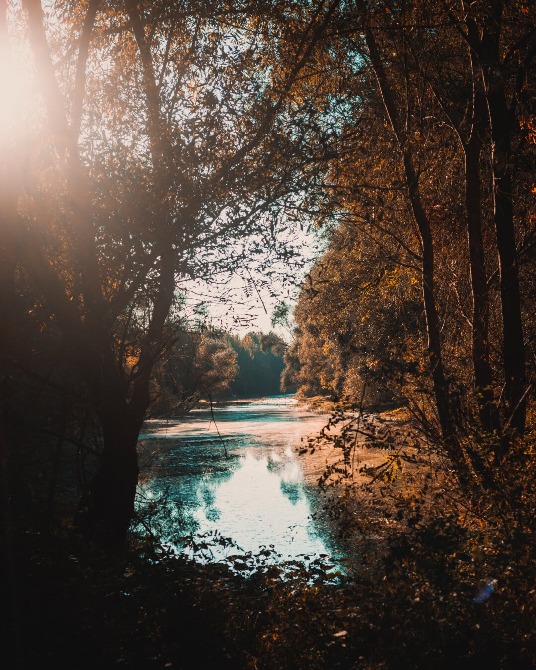 Sonnenstrahlen, sonnig, am See, Sumpf, Herbstsaison, majestätisch, Bäume, Fluss, Wald, Sonnenuntergang