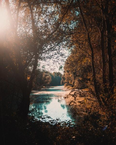 sunrays, sunny, lakeside, swamp, autumn season, majestic, trees, river, forest, sunset