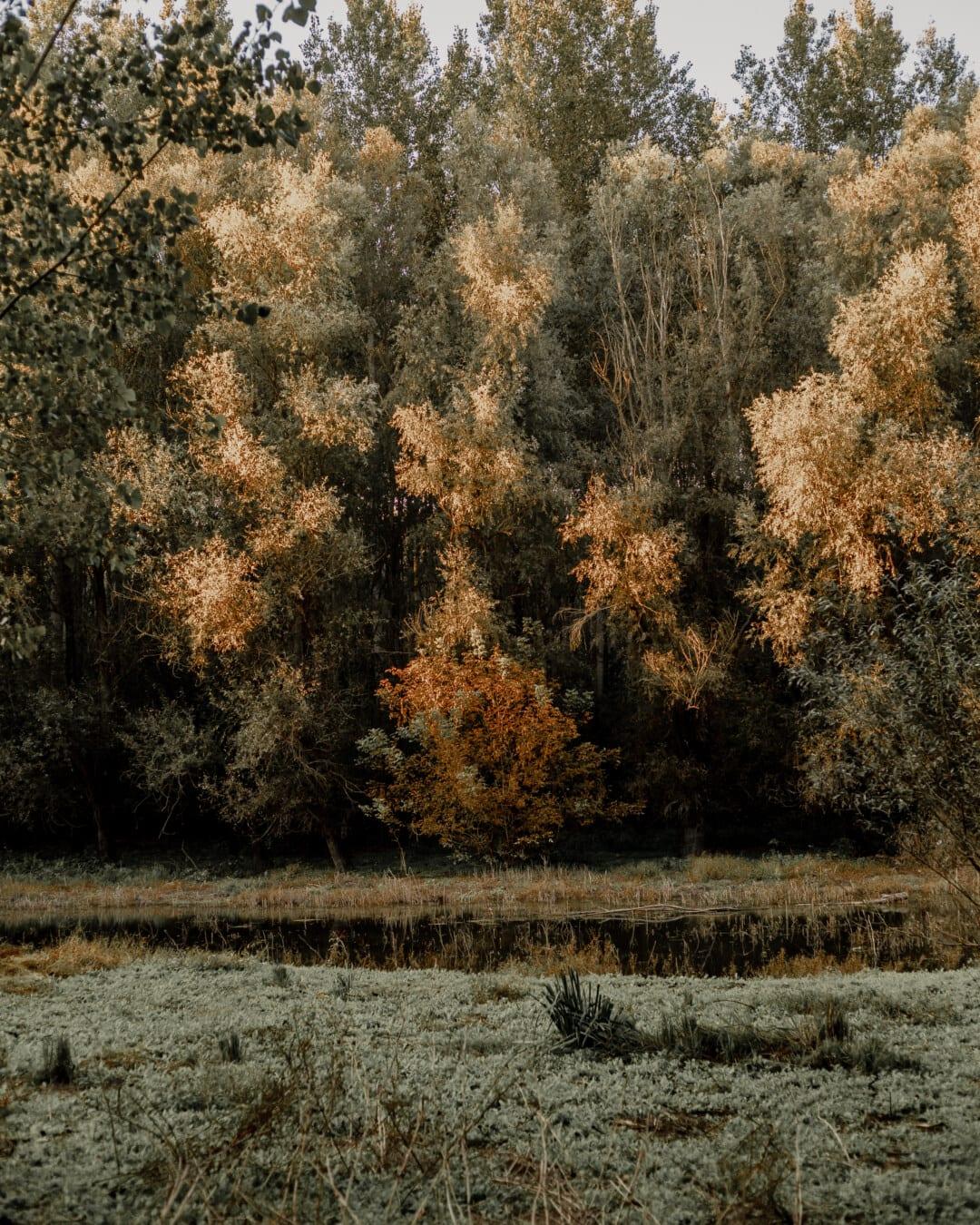 swamp, majestic, autumn season, forest, marshland, nature, dawn, landscape, wood, autumn