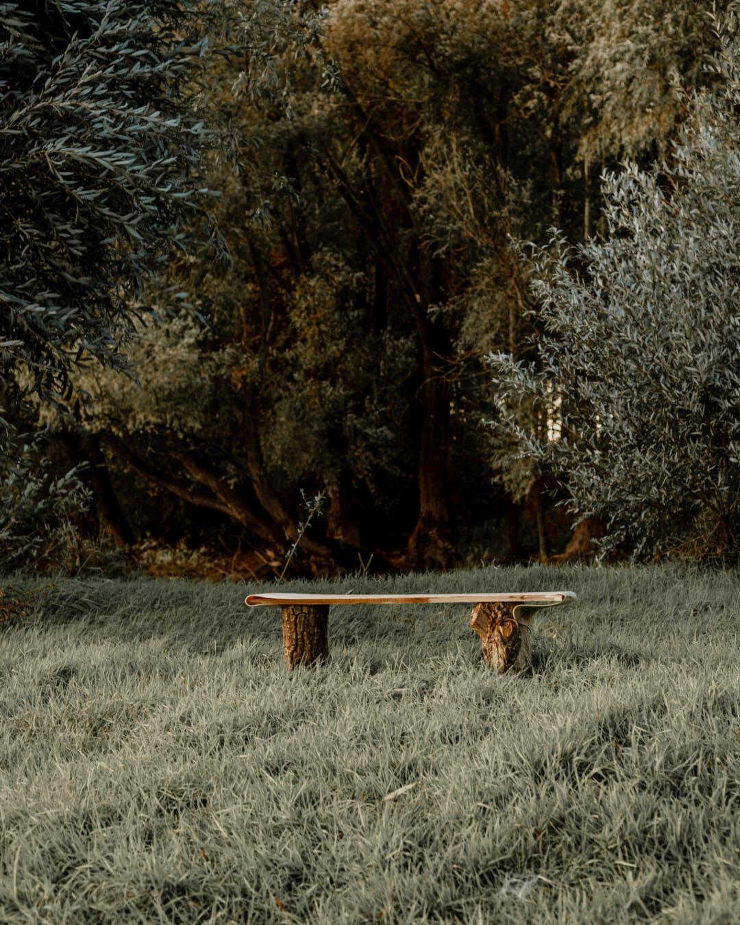 rural, bench, abandoned, grassy, trees, september, autumn season, tree, forest, landscape
