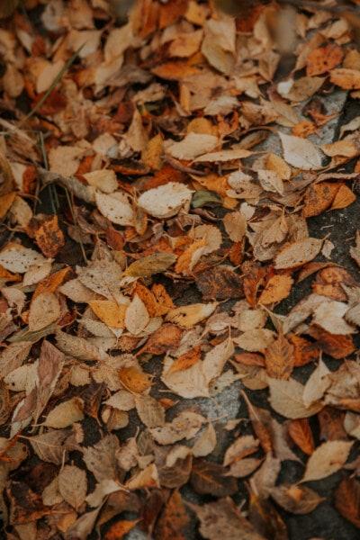 sec, feuille, feuilles, saison sèche, automne, modèle, octobre, fermer, texture, nature