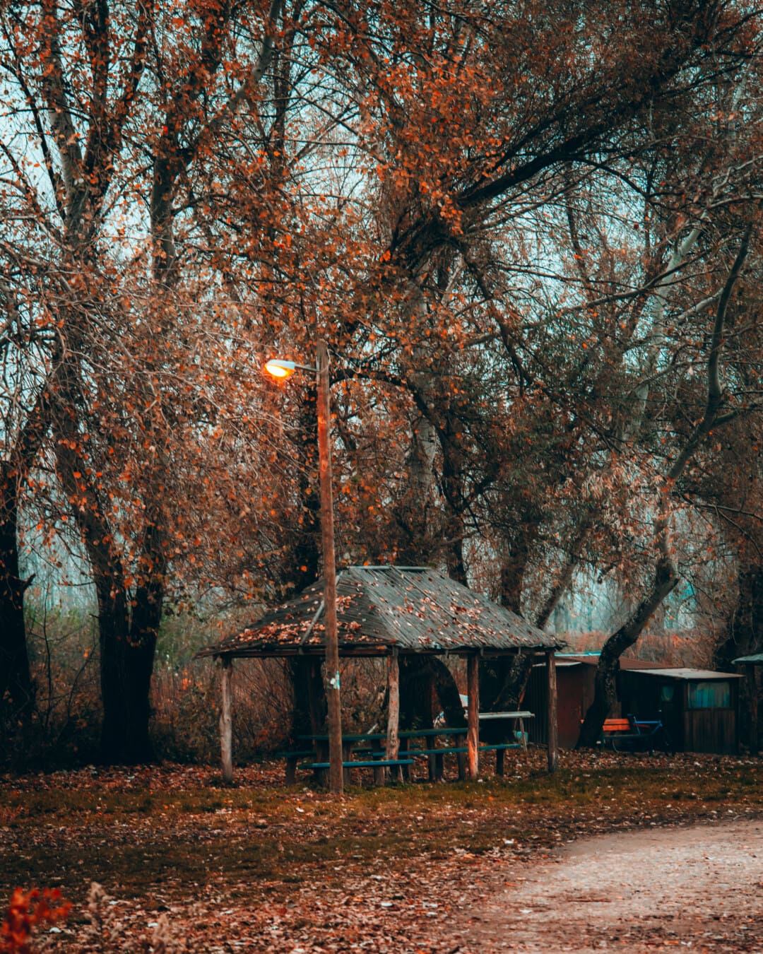 saison de l'automne, soirée, route forestière, zone de villégiature, hangar, parc, arbre, automne, paysage, forêt