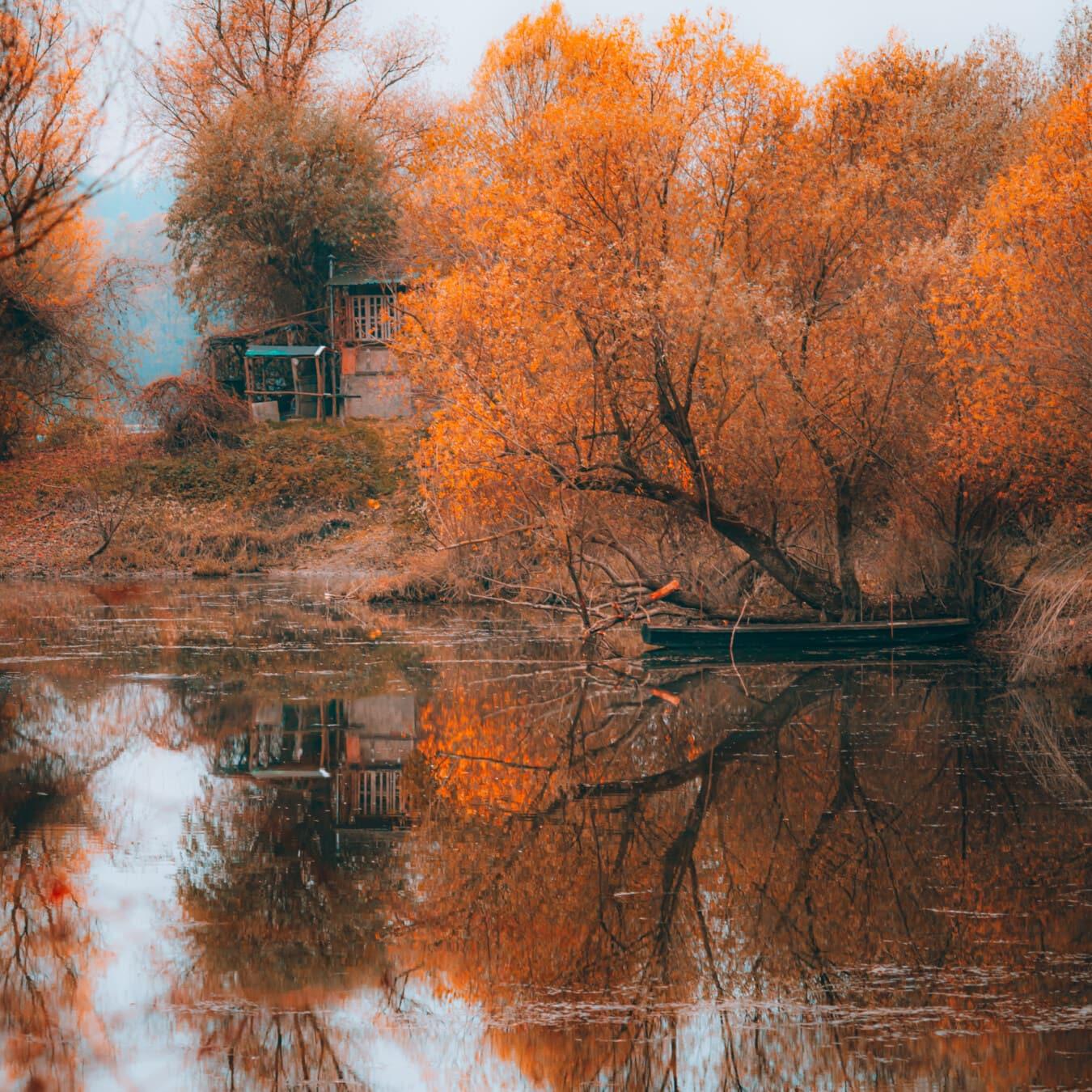 jaune orangé, couleurs, saison de l'automne, bateau, au bord du lac, paysage, branches, nature, paysage, forêt