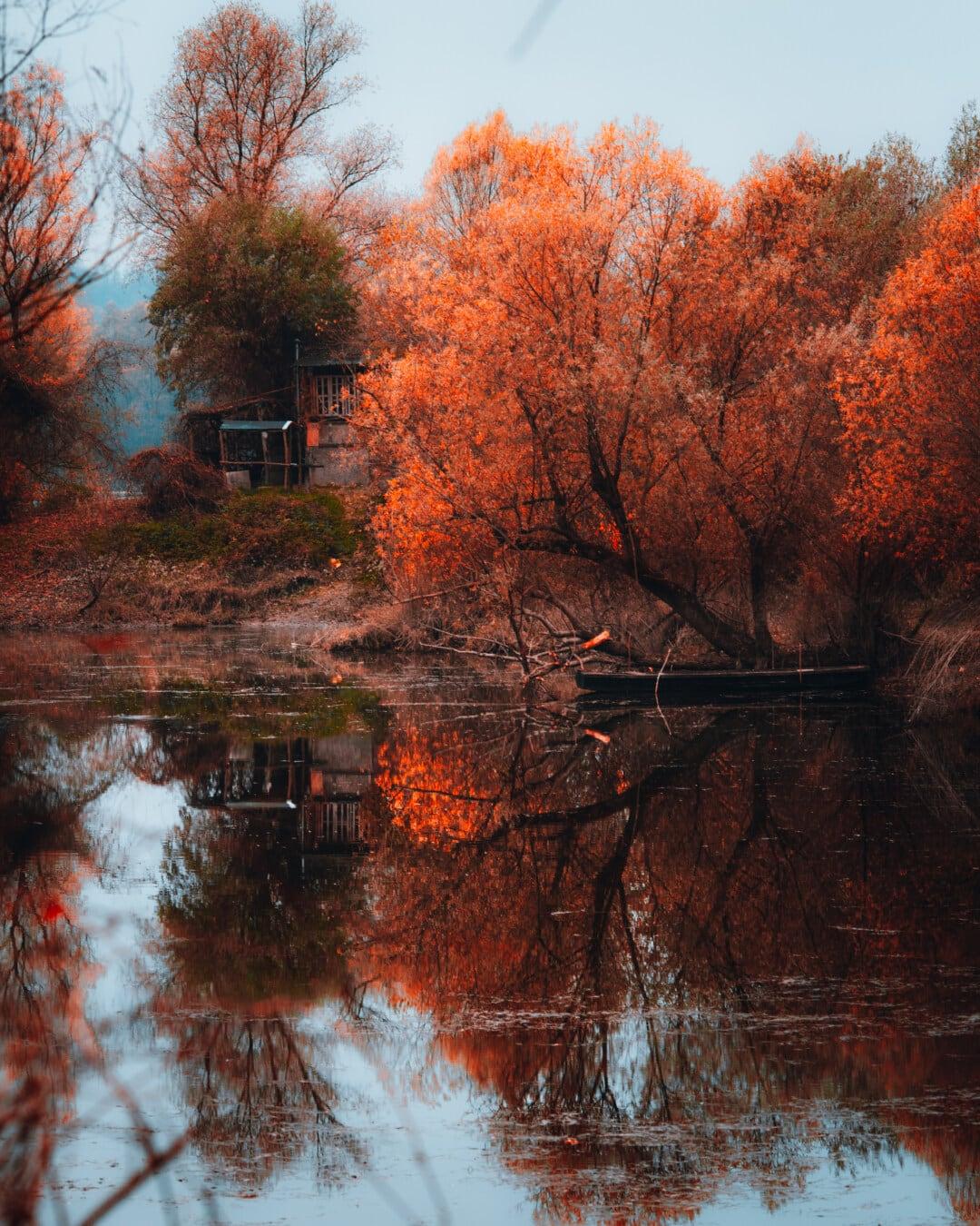 saison de l'automne, Lac, côte, arbres, rural, matin, jaune orangé, couleurs, automne, arbre