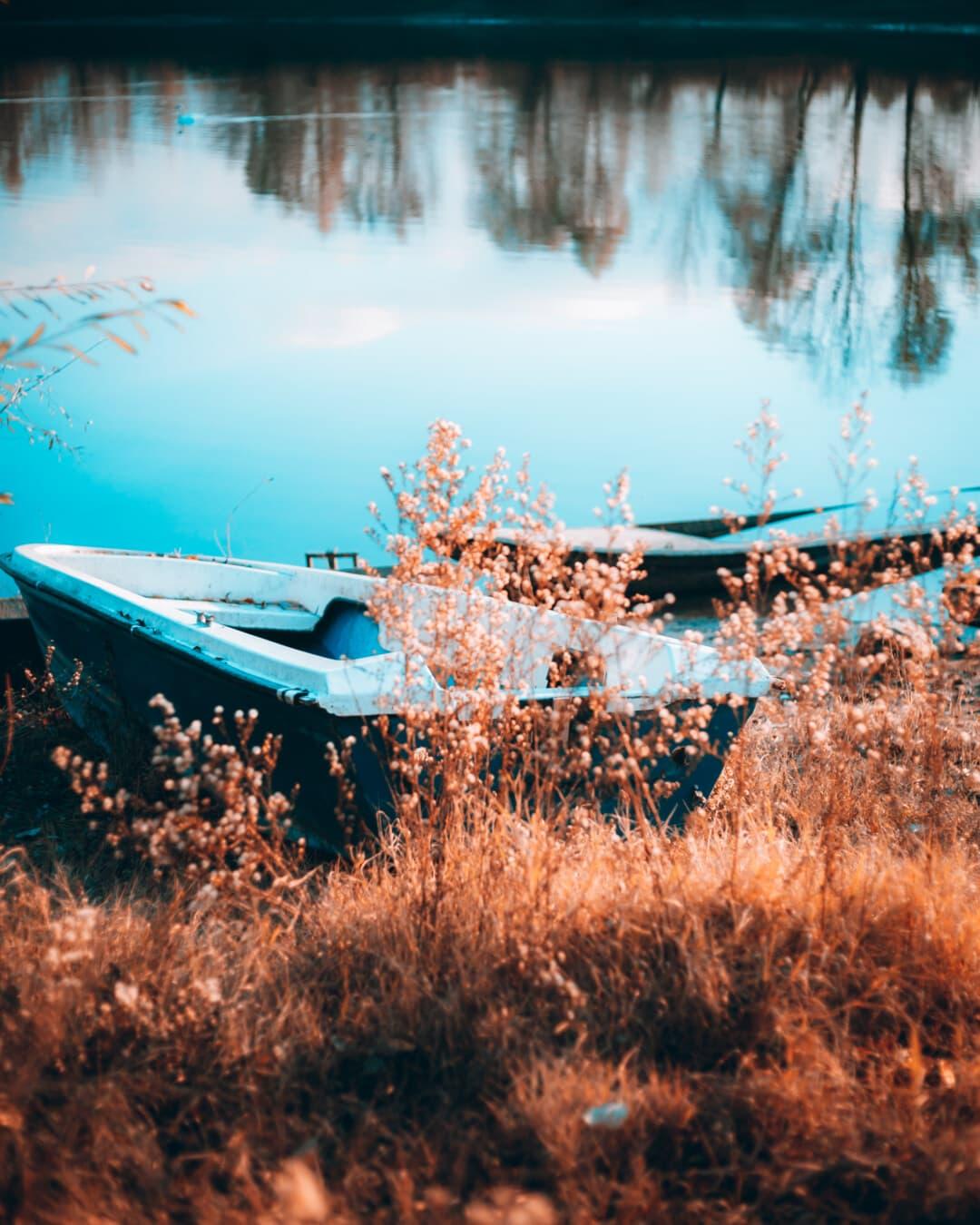 côte, bateau, saison de l'automne, ensoleillée, au bord du lac, graminées, saison sèche, mauvaises herbes, paysage, eau