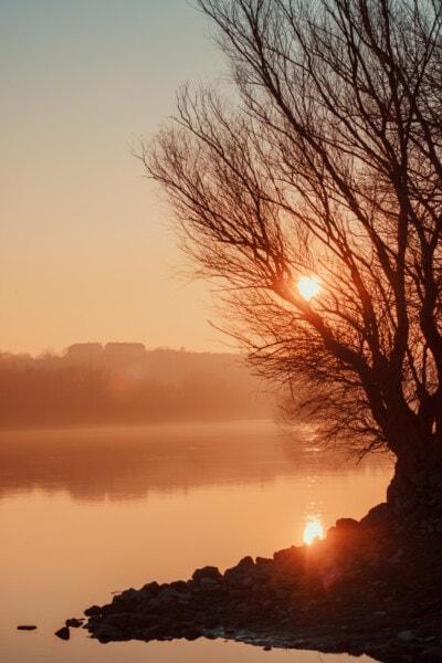 river, landscape, sunset, dawn, tree, silhouette, sun, evening, fog, backlight