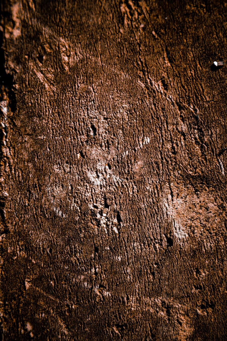 cortex, sepia, bark, close-up, tree, pattern, surface, grunge, material, old