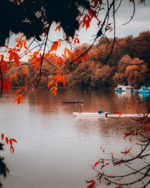 Erholungsgebiet, Motorboot, Herbstsaison, Hafen, See, Angelboot/Fischerboot, Struktur, Wasser, Natur, im freien