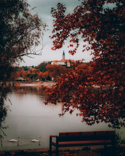 autunno, alberi, Riva del fiume, Cigno, uccelli, Torretta di Chiesa, monastero, Castello, foglia, orizzontale