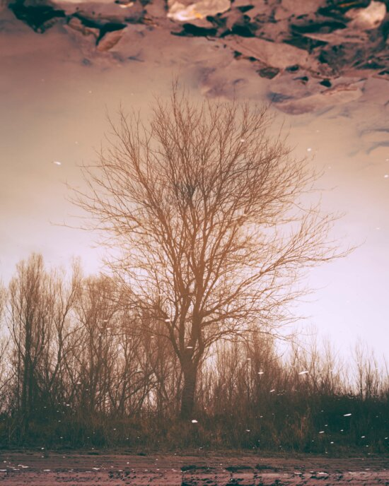 mud flat, mud, tree, water, reflection, landscape, dawn, nature, branch, atmosphere