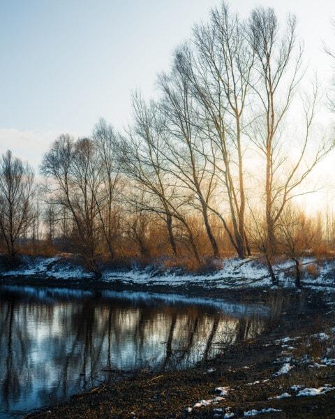 coastline, winter, poplar, sunrise, majestic, calm, forest, wood, dawn, tree