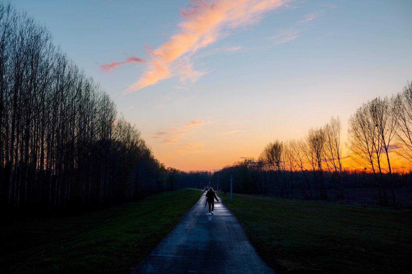 soirée, crépuscule, crépuscule, Itinéraire, personne, seul, paysage, aube, arbre, coucher de soleil