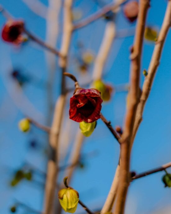 flower bud, outdoors, tree, nature, branch, leaf, flower, fair weather, blue sky, bright