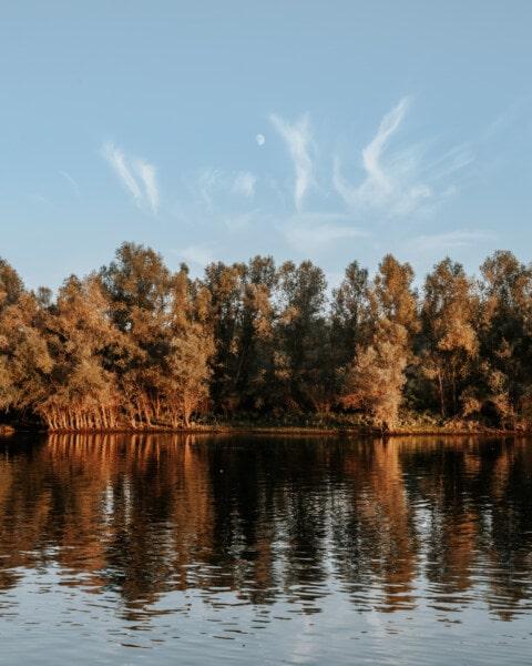 arbre, réflexion, Lac, eau, paysage, rivière, marais, nature, bois, aube