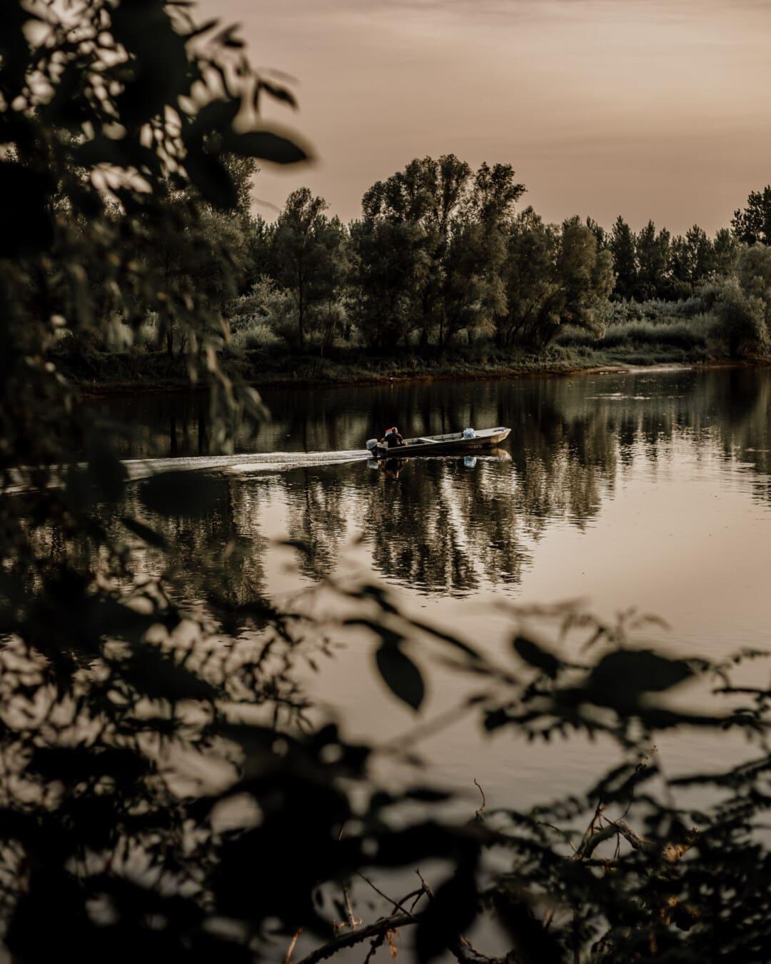 marais, paysage, rivière, arbre, forêt, Lac, eau, réflexion, aube, monochrome