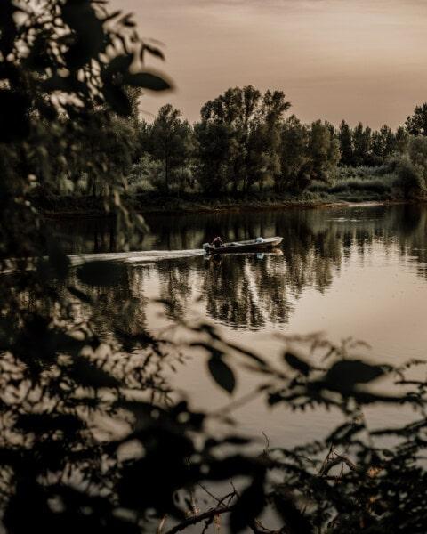 močiar, Príroda, rieka, strom, les, jazero, voda, reflexie, svitania, Monochromatický