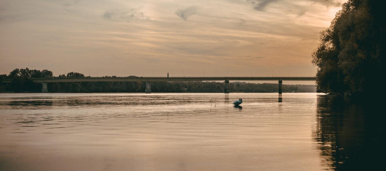 Sonnenstrahlen, Panorama, Sonnenaufgang, Fluss, ruhig, Vogel, Schwan, majestätisch, Brücke, Sonnenuntergang