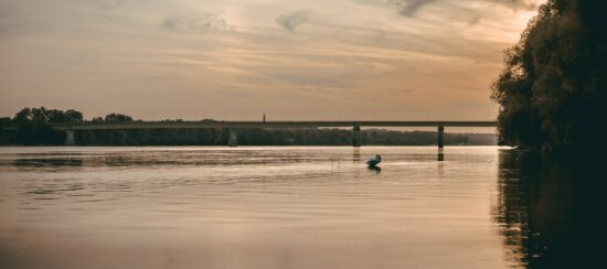 sunrays, panorama, sunrise, river, placid, bird, swan, majestic, bridge, sunset