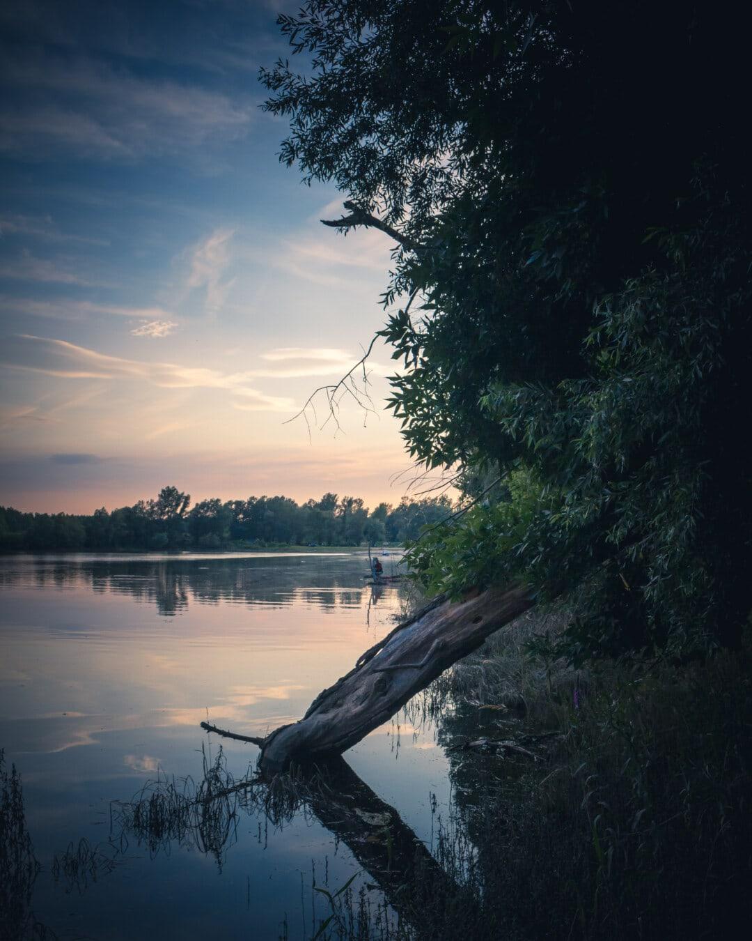 rivière, berge, bois flotté, crépuscule, majestueux, placide, arbre, eau, aube, réflexion