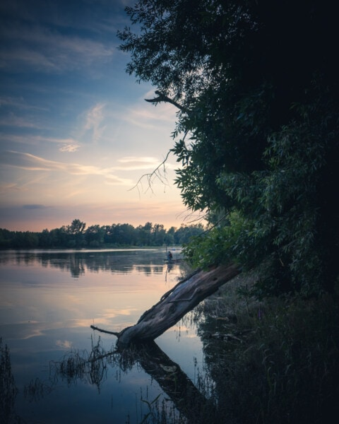 river, riverbank, driftwood, dusk, majestic, placid, tree, water, dawn, reflection