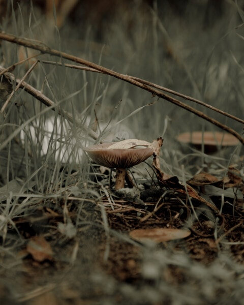 mushroom, fungus, wood, nature, moss, grass, spore, leaf, poison, wildlife
