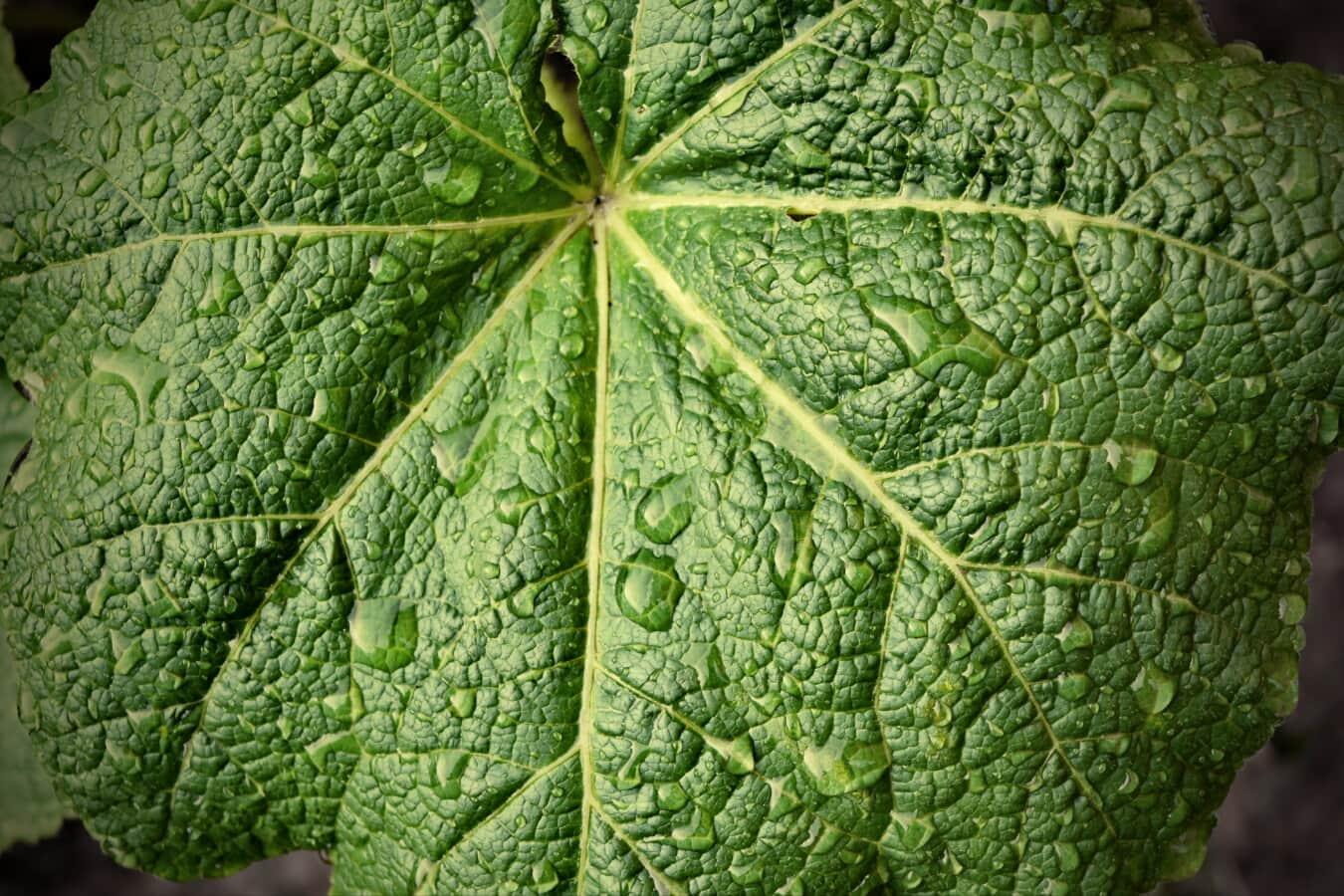 Wassertropfen, groß, Regentropfen, grünes Blatt, Frühling, Feuchtigkeit, Flüssigkeit, Botanik, Flora, Natur